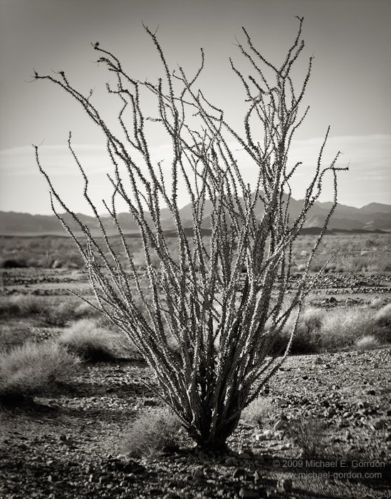 michael-e-gordon_ocotillo-study.jpg