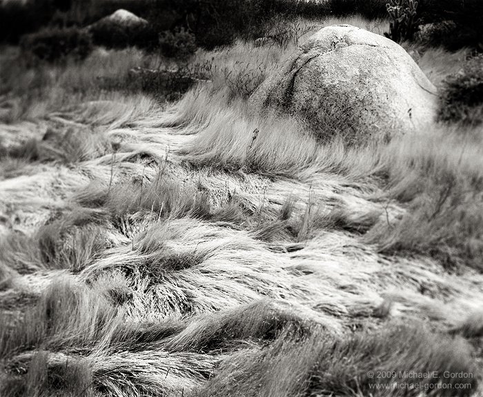 michael-e-gordon_windblown-grass.jpg