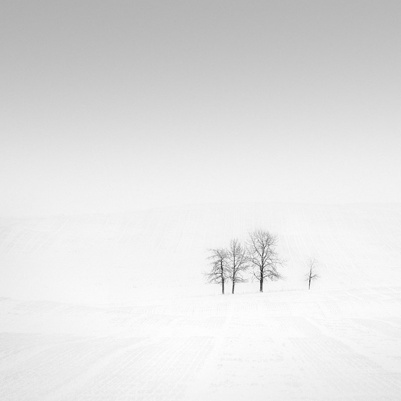 13-olivier-du-tre_lonely-trees-in-snow-covered-field.jpg