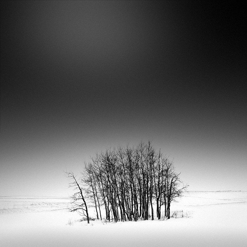 16-olivier-du-tre_trees-in-snow-2.jpg