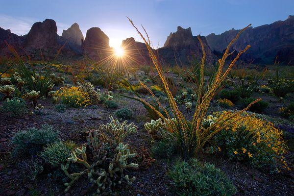desert-garden_ian-plant.jpg