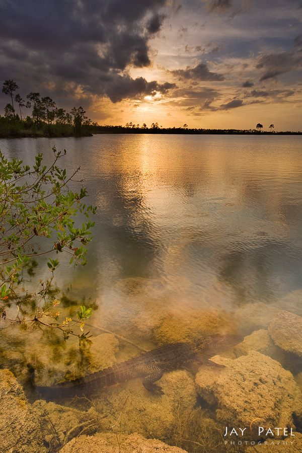 jay-patel_essence-of-the-everglades.jpg