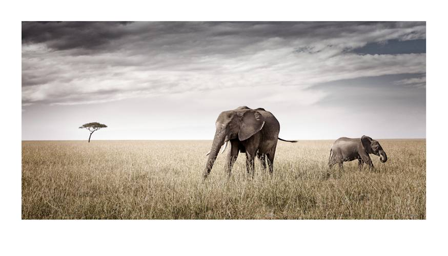 loxodonta_union-by-klaus-tiedge.jpg