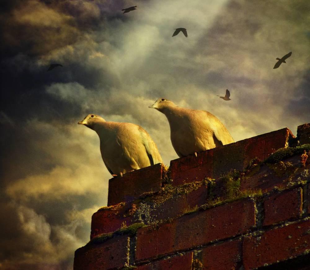 audran-gosling-10.jpg