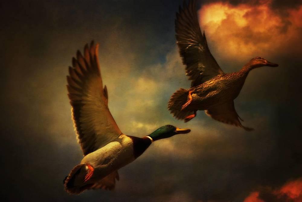 audran-gosling-14.jpg