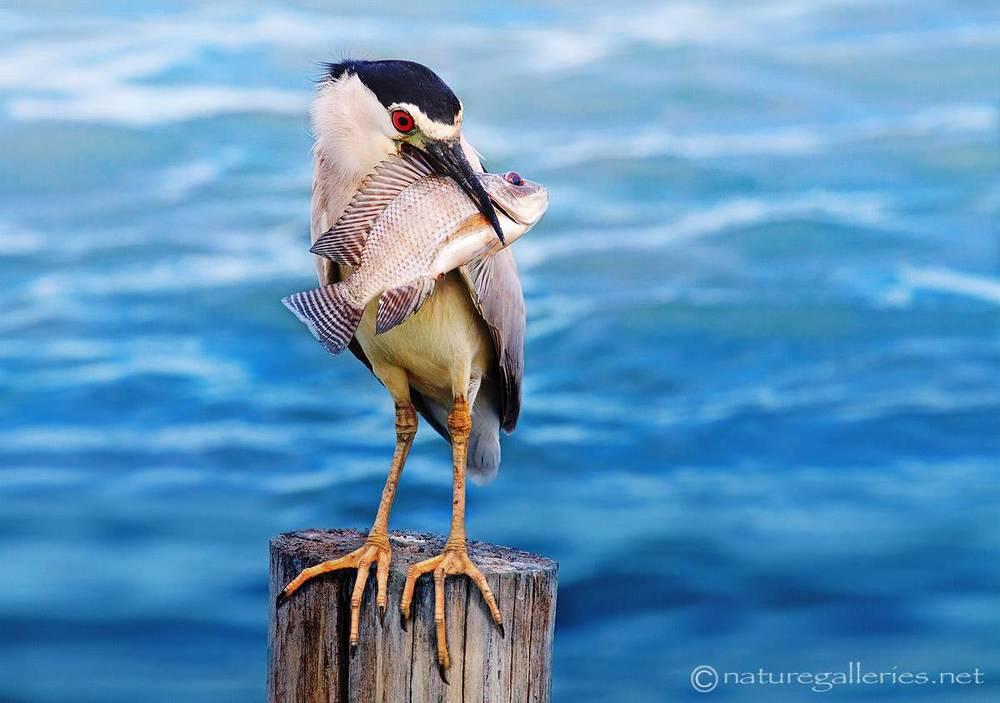 sompob-sasi-smit_bird.jpg