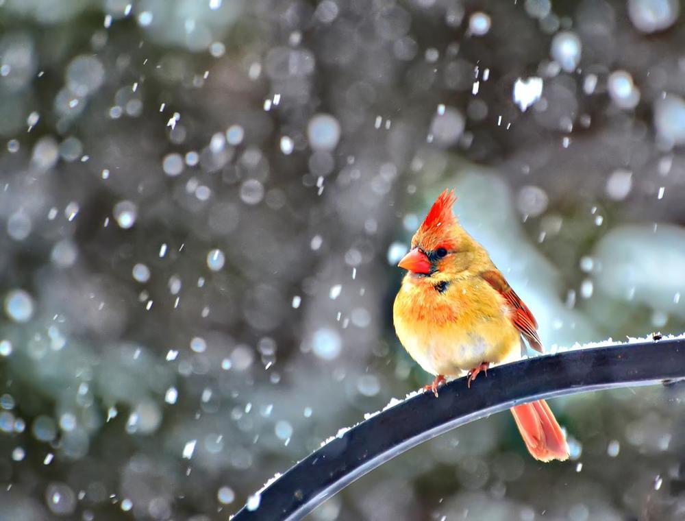 snowbird-by-jeff-clow.jpg
