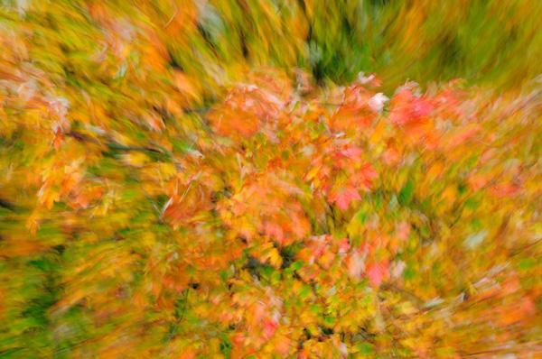 werner-bollmann-autumn_leaves.jpg