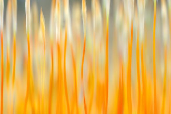 werner-bollmann-moss.jpg