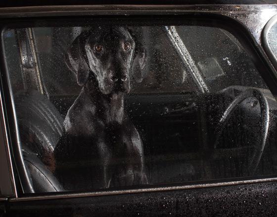 martin_usborne-dog_6.jpg