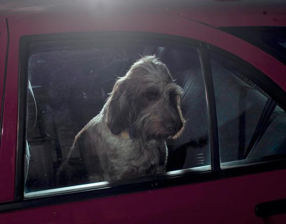 martin_usborne-dog_1.jpg