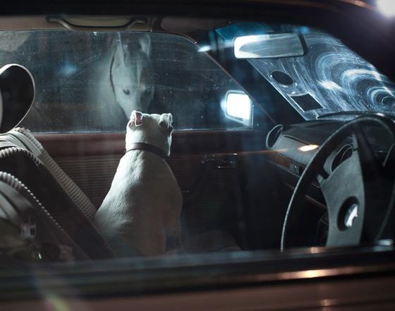 martin_usborne-dog_2.jpg