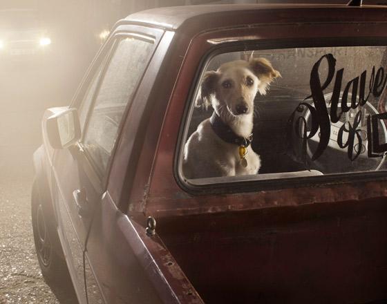 martin_usborne-dog_4.jpg