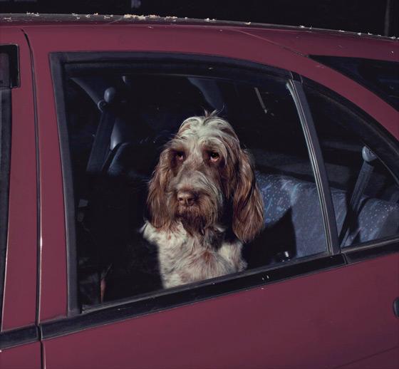 martin_usborne-dog_3.jpg