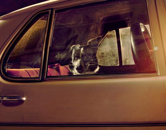 martin_usborne-dog_8.jpg