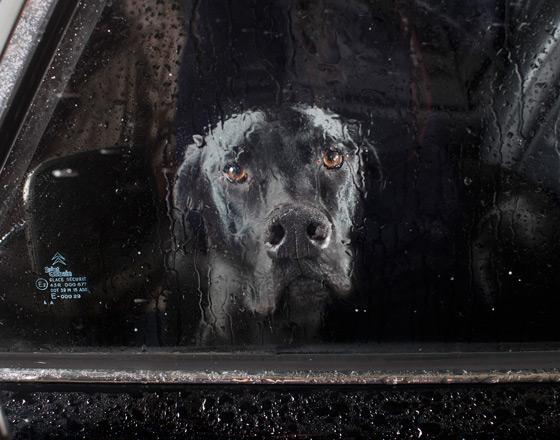 martin_usborne-dog_5.jpg