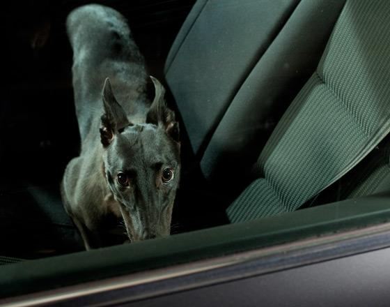 martin_usborne-dog_11.jpg