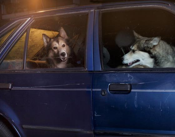 martin_usborne-dog_12.jpg