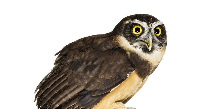 andrew-zuckerman-birds-3.jpg