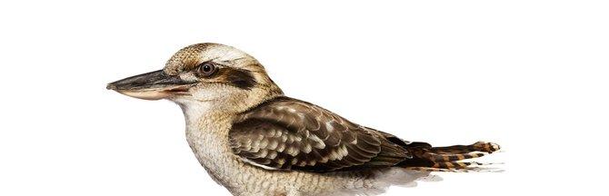 andrew-zuckerman-birds-5.jpg