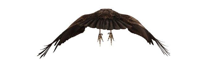 andrew-zuckerman-birds-6.jpg
