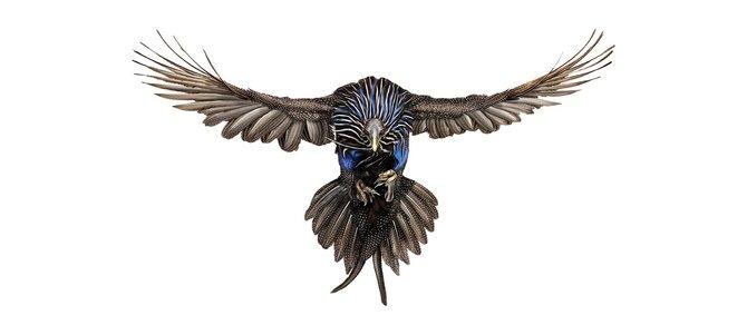 andrew-zuckerman-birds-7.jpg