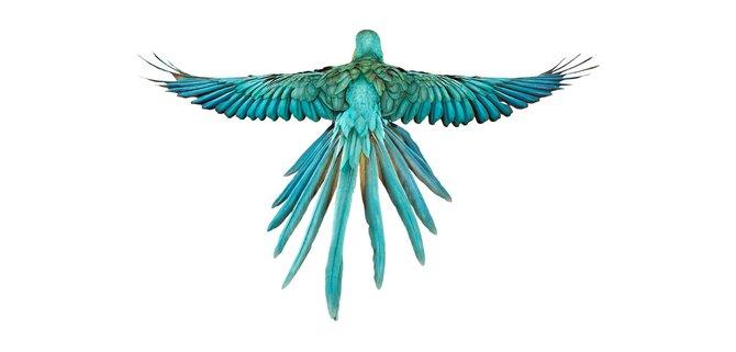 andrew-zuckerman-birds-9.jpg