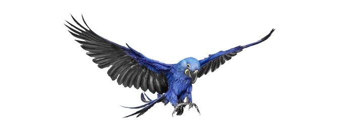 andrew-zuckerman-birds-11.jpg