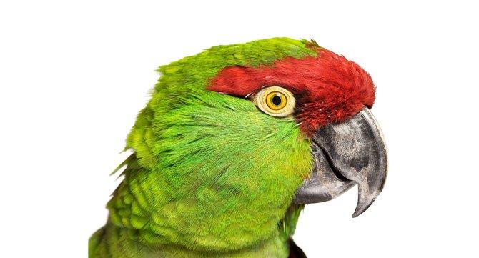 andrew-zuckerman-birds-14.jpg