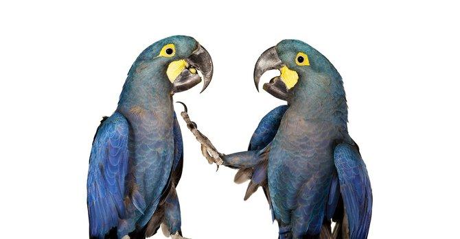 andrew-zuckerman-birds-16.jpg