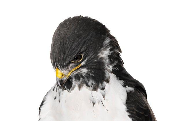 andrew-zuckerman-birds-17.jpg