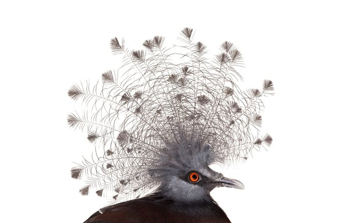 andrew-zuckerman-birds-18.jpg