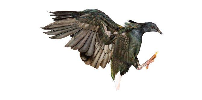 andrew-zuckerman-birds-22.jpg