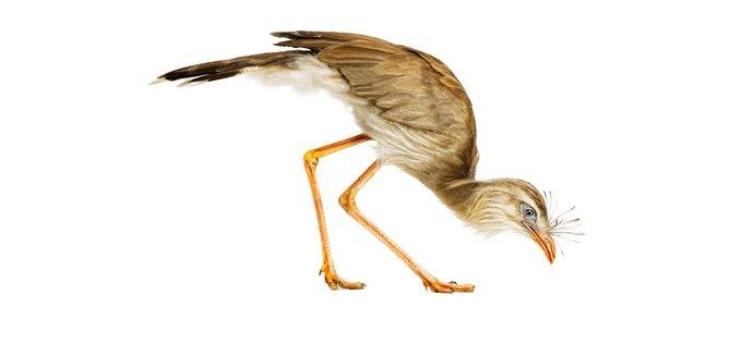 andrew-zuckerman-birds-25.jpg