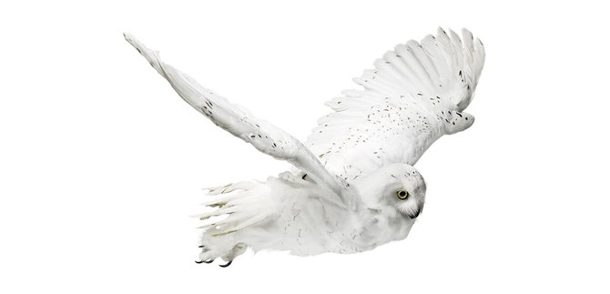 andrew-zuckerman-birds-29.jpg