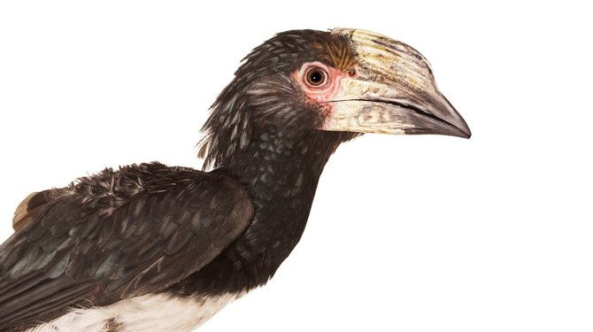 andrew-zuckerman-birds-31.jpg