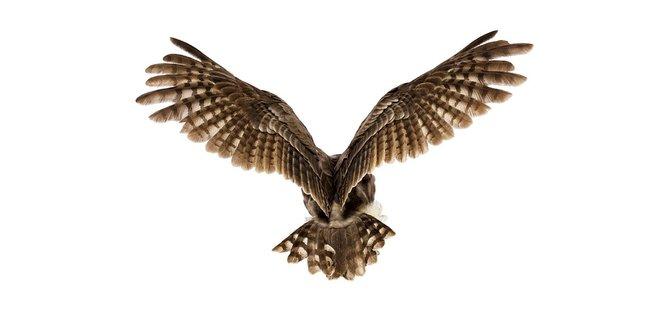 andrew-zuckerman-birds-30.jpg