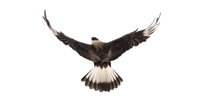 andrew-zuckerman-birds-32.jpg