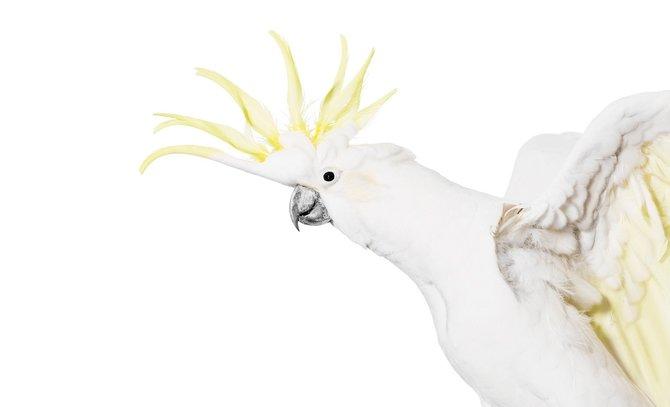 andrew-zuckerman-birds-34.jpg