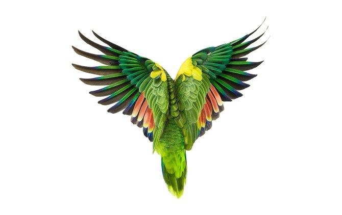 andrew-zuckerman-birds-37.jpg