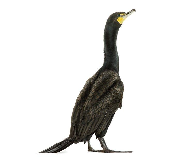andrew-zuckerman-birds-39.jpg