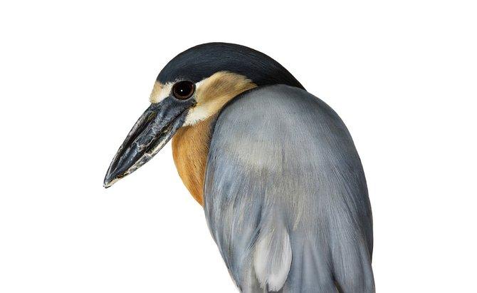 andrew-zuckerman-birds-42.jpg