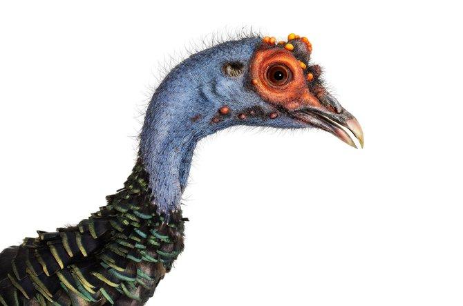 andrew-zuckerman-birds-44.jpg