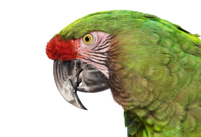 andrew-zuckerman-birds-50.jpg