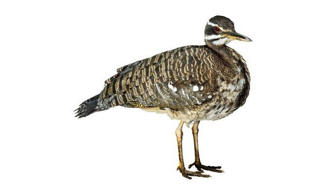 andrew-zuckerman-birds-51.jpg