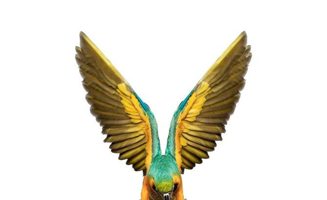 andrew-zuckerman-birds-53.jpg