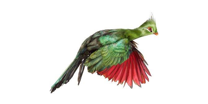 andrew-zuckerman-birds-60.jpg
