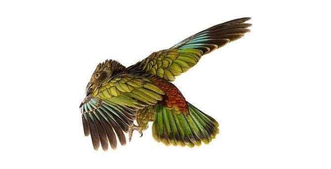andrew-zuckerman-birds-61.jpg