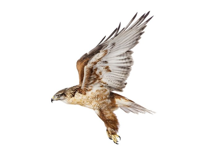 andrew-zuckerman-birds-66.jpg