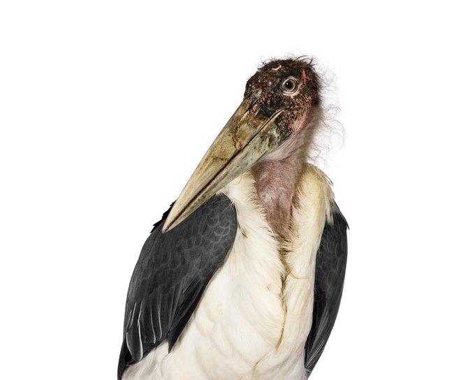 andrew-zuckerman-birds-68.jpg
